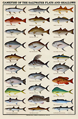 saltwater fish identification chart, gamefish