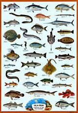 saltwater fish identification chart
