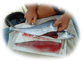 Filleting s Spanish Mackerel