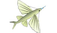 Trolled astern, a dead flyingfish rigged like this will behave very much like the real thing – sometimes submerged, at other times skipping along the surface and even taking short flights.