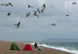 Surf fishing on Chesil Beach in the southwest of England. A great spot for winter cod and summer bass.